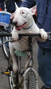 bike-dog