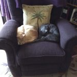Two cats in chair