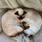 Two cats entwined