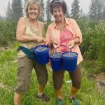 Two Women picking blueberries