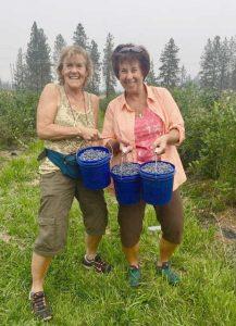 Two Women picking blueberries