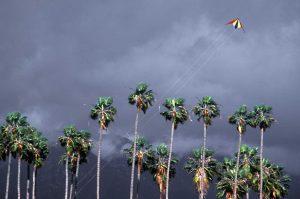 Kite in storm