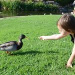 Child meeting duck