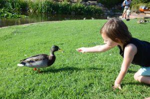 Child meeting duck